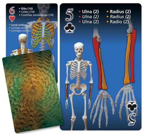 The human skeleton - playing cards - Funique science games, kits and ...