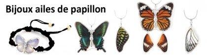Bijoux ailes de papillon & insectes véritables