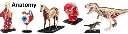 Human & Animal Anatomy Models
