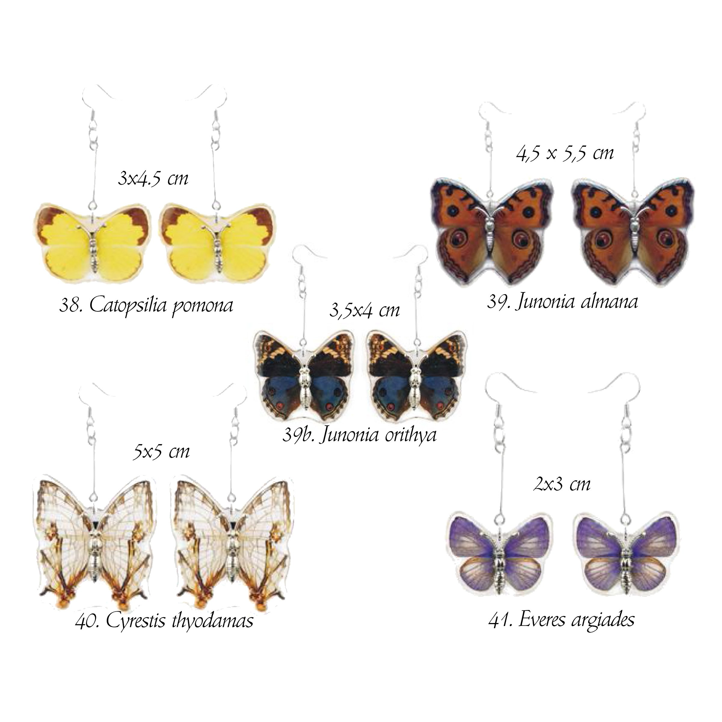 Jewelry - Real butterfly wing earrings - Funique science games, kits ...